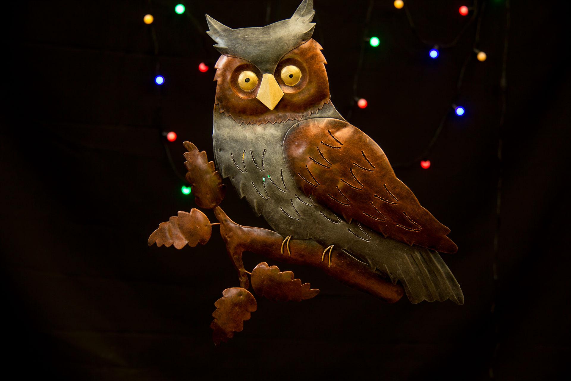 enz-of-the-earth-owl-1080-IMG_9676